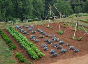home veggie garden