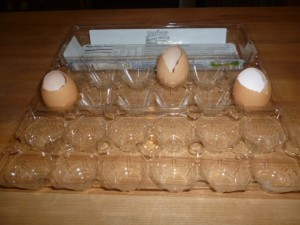 plastic egg carton with egg shell seed pots to make an eco friendly seedling tray