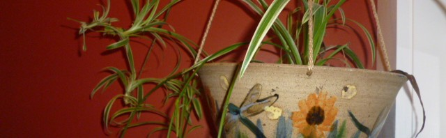 Enhance Your Natural Home With House Plants