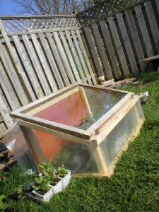 cold frame for organic gardening